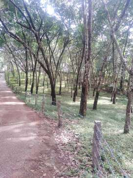 40 cents of rubber plantation for sale