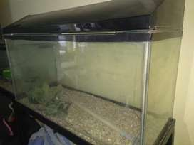 Large customized aquariam for sale
