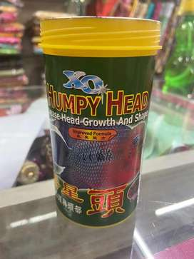 Humpy Head for Flower Horn