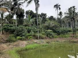 3 acre land with  house  in Mananthavady  municipality