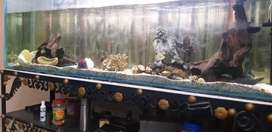 6 Feet long 2 feet height fish aquarium for sale