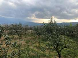 Tanah kebun apel di batu shm paling murah di punten bumi aji