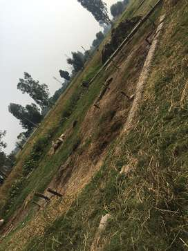100mtr from road (approx) , Cornor plot.