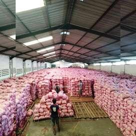 Bawang putih Distributor / supplier / agen (sinco / honan / kating)