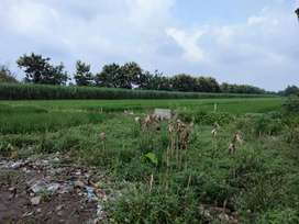 Di jual tanah untuk industri di Tumapel Mojosari Mojokerto