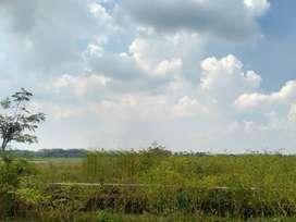 Tanah plot industri di Wringinanom Gresik