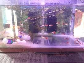 Diptanu aquarium centre