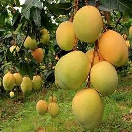 200 Acre Tindivanam to Thiruvannamalai Road Land For Sale GoodLocation