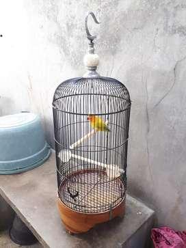 LOVEBIRD PASTEL BLOROK