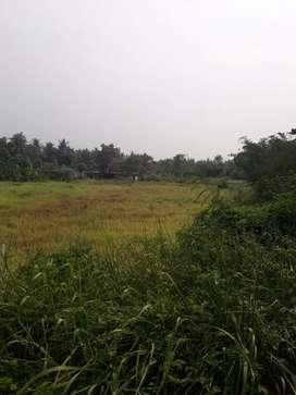 jual tanah seluas 2000 meter .tanah kering perkebunan kosong