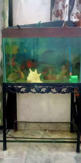 12 mm glass fish(30*18*15) aquarium with  iron stand
