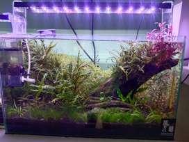 Aquarium aquascape