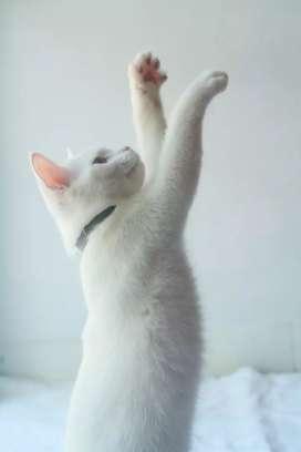 Jasa mandi dan grooming kucing