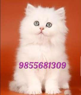 Cute lovely kittens