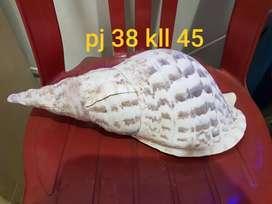 Fossil kerang laut uk pj 38 kk 145