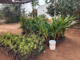 Plots with sandalwood plantation