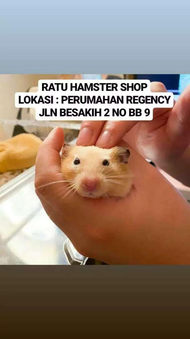 Hamster ku bebas bau sdh vaksin 0