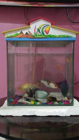Fish tank with roof it is urgent to sell