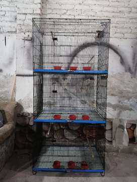 Brand new 3story cage