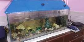 Fish aquarium in amazing condition with