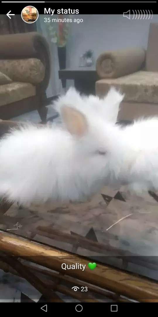 Earn 50k to 100k monthly by doing Rabbit farming 0