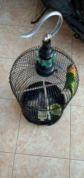 Burung Love Bird + Sangkar