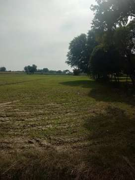 Agriculture Laand for sale