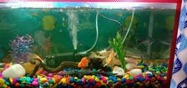 Fish aquraim