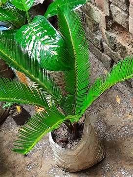 Show pics plant