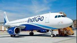 huge vacancy in indigo airlines