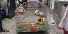 Australian Parrots with Cage