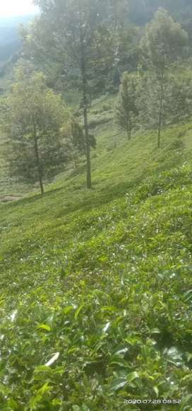 2 Acre farm Land for Sale at ooty