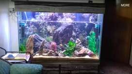 Beautiful Fush Aquarium of Size 6ft×4ftx1.5ft Tempered Glass or Any.