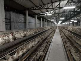 Poultry farm work