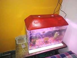 New fish equarim