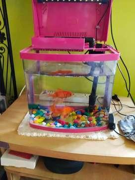 Aquarium Box