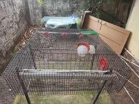 Kada Cage For Sale