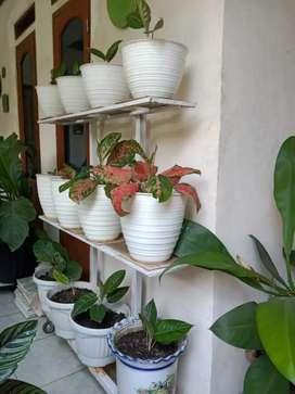 Jual rak tanaman hias minimalis
