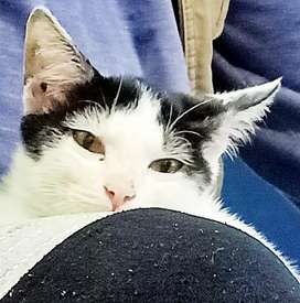In search of a new home for our Cat. (Male)