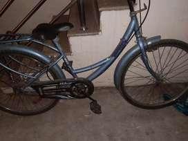 Lady bird cycle