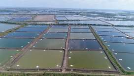 Supervisor for Aqua Farma