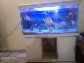 Fish aquarium with 12 fishes ,filter ,bubbles pump and heater