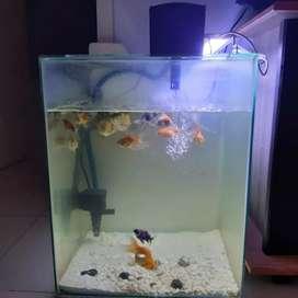 Ikan koki aquarium kaca