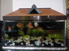 1.5 ft. Aquarium with top and filter