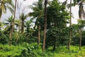 26 cent plot for sale in Kodakkad, near cheruvathur, Kerala