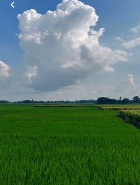 25 Acre Agriculture land in district Bahawalnagar tehsil Haroonabad