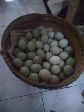 Telur Bebek Pangon