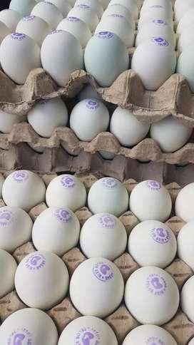 Menjual telur asin