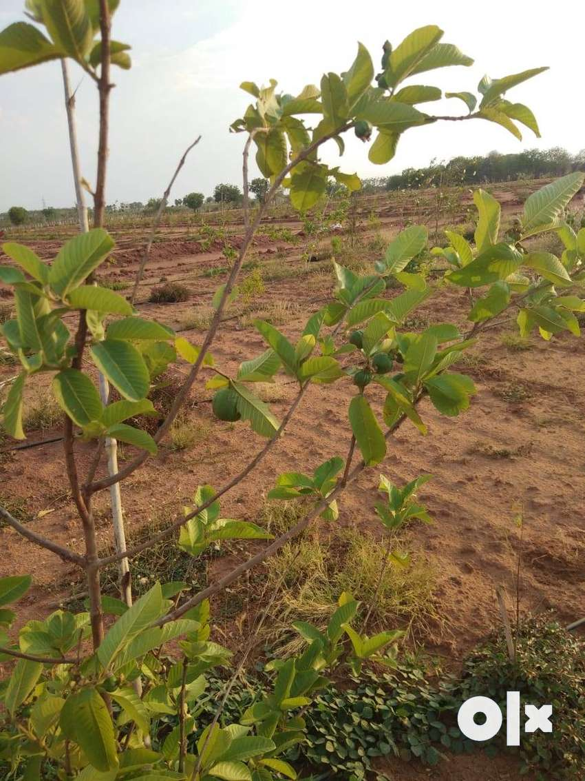 Farm Land for sale in Aleru, Yadgirigutta 0