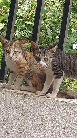 Cute little kittens need a good home